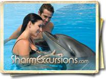 Man and woman swimming with dolphins