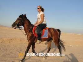 Sharm Horse Riding Tour