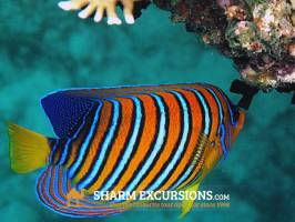 Colourful fish at Sharm El Sheikh