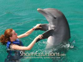 Woman playing with dolphins on dolphin swimming tour