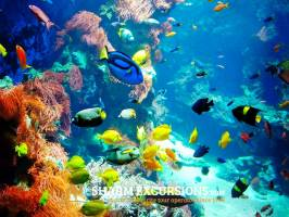 Colourful fish at Tiran Island