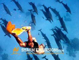 Swimming with Dolphins at Tiran Island from Sharm