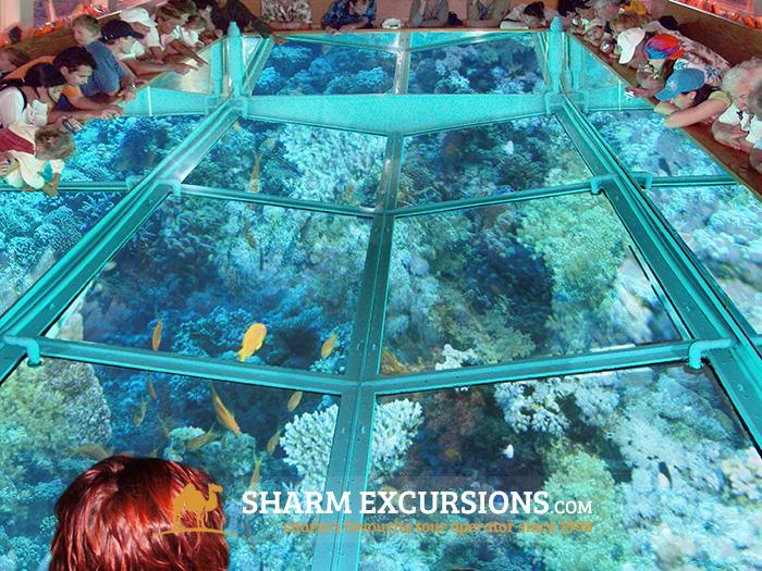 Sharm El Sheikh Glass Bottom Boat Trip