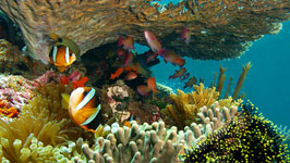 Snorkelling at Ras Mohammed National Park by road