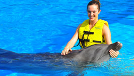 Swimming with Dolphins in Sharm el Sheikh